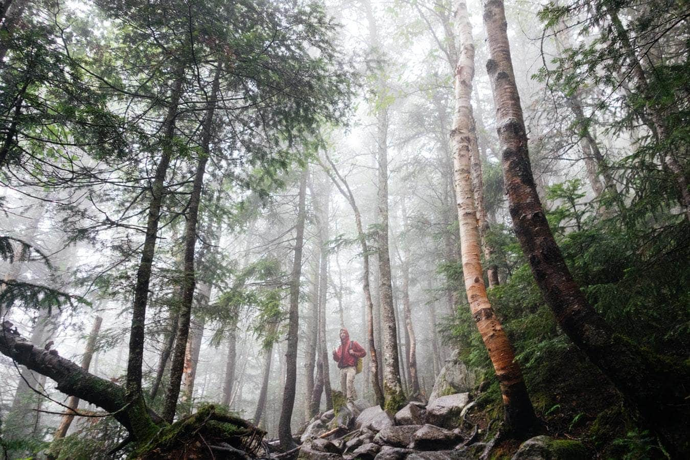 best hikes in Oregon for marijuana smoking stoners in the woods hiking